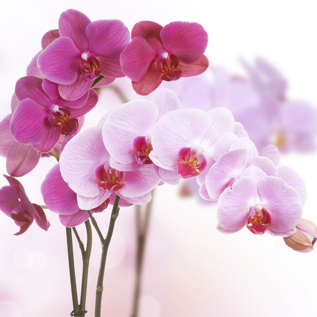 How To Care For An Orchid Indoors